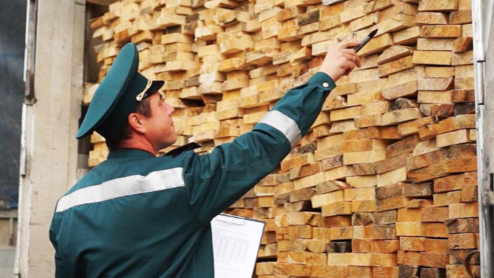 Через вологодскую таможню незаконно везли лес