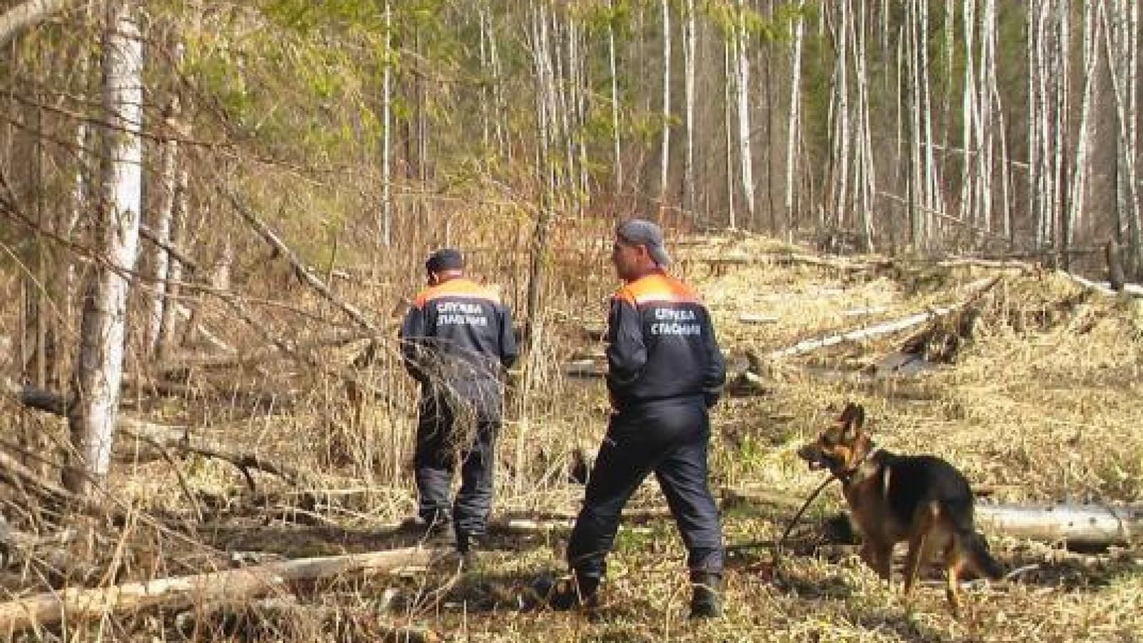 Пропавшего в лесу пенсионера нашли мёртвым