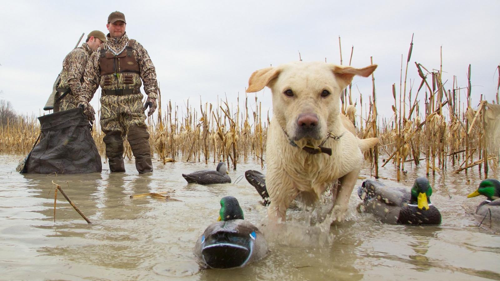 В конце этого месяца на Вологодчине откроется сезон охоты