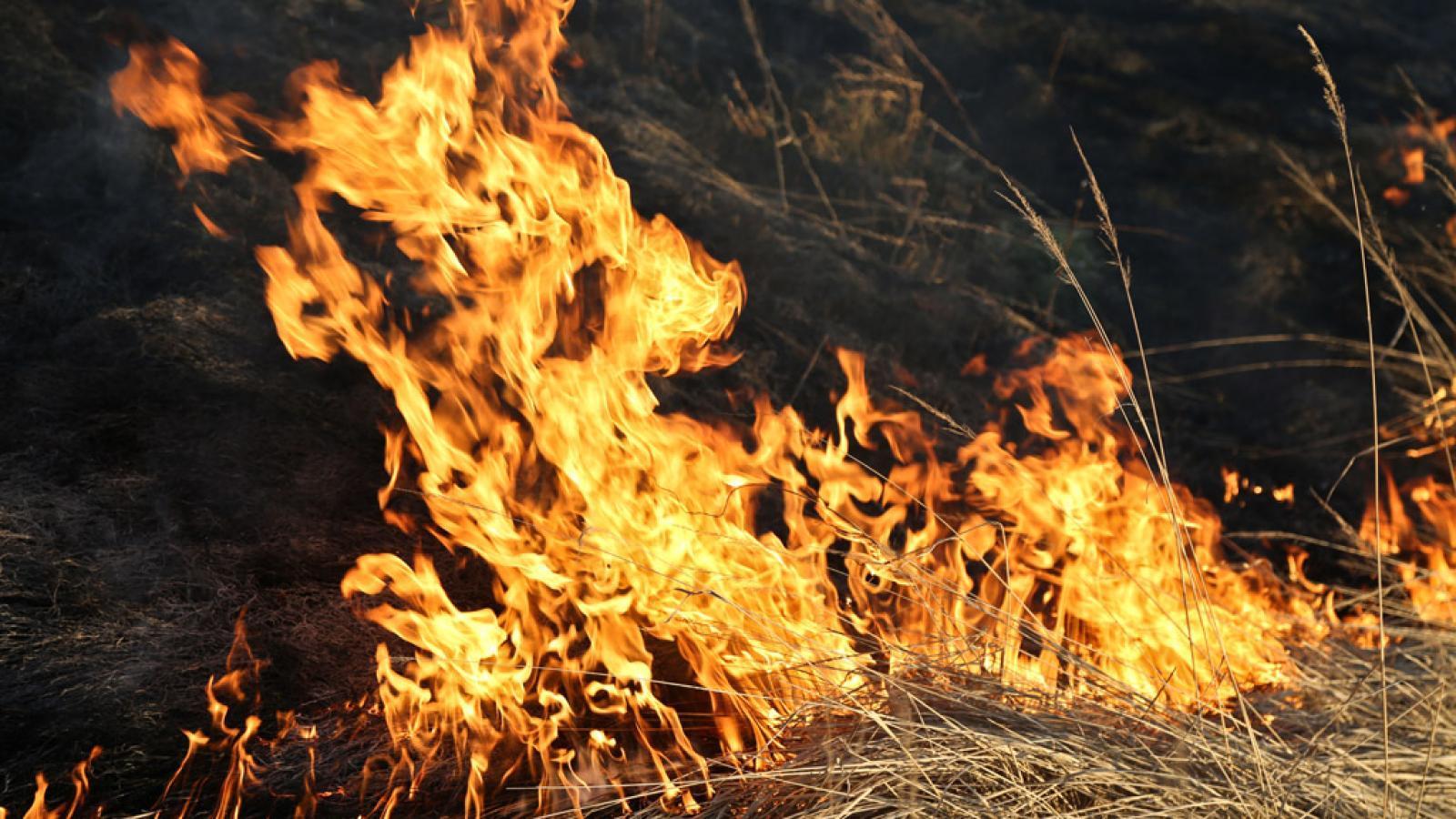 На Вологодчине введен особый противопожарный режим