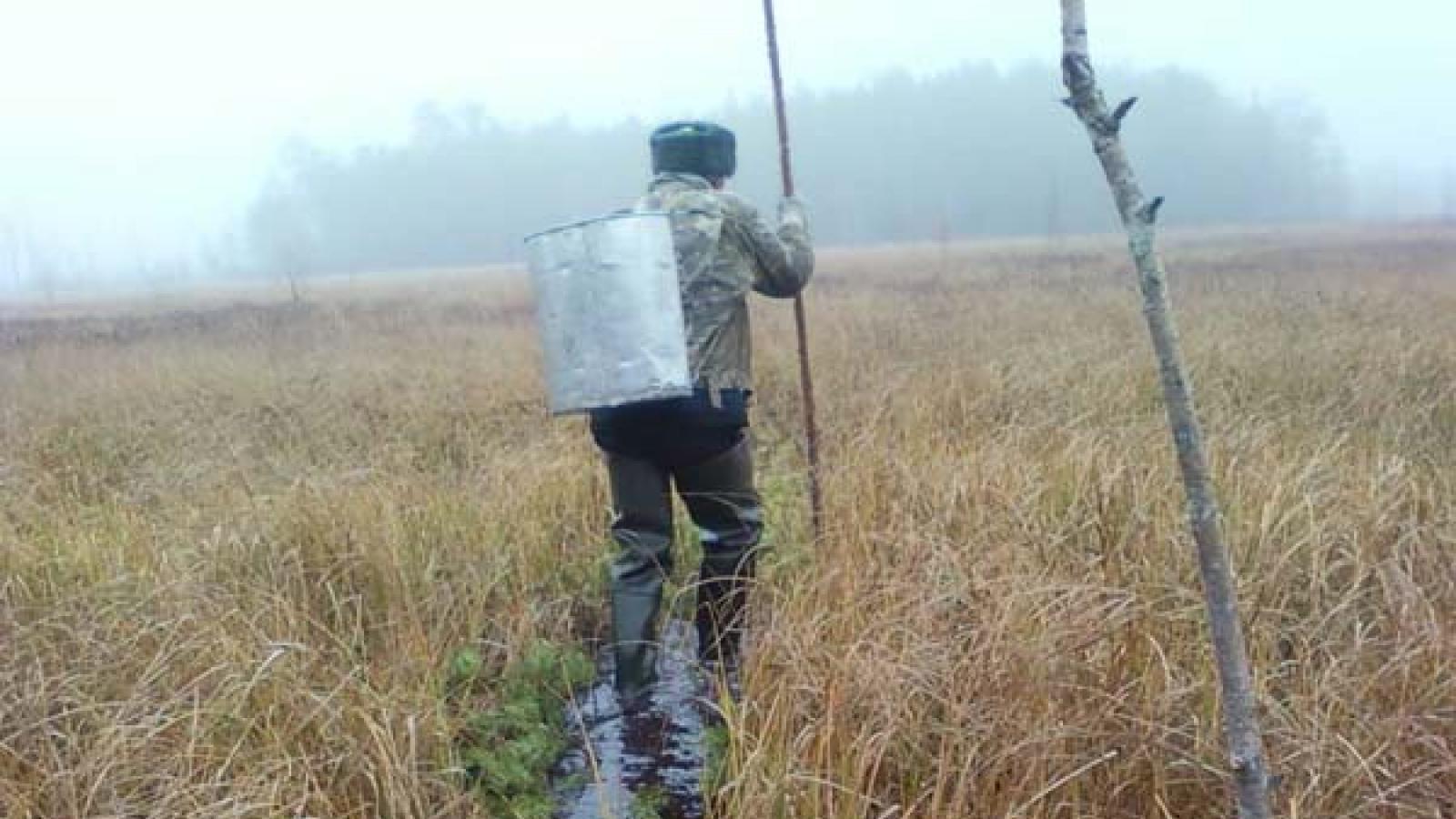 На болотах Белозерского района спасли потерявшегося мужчину