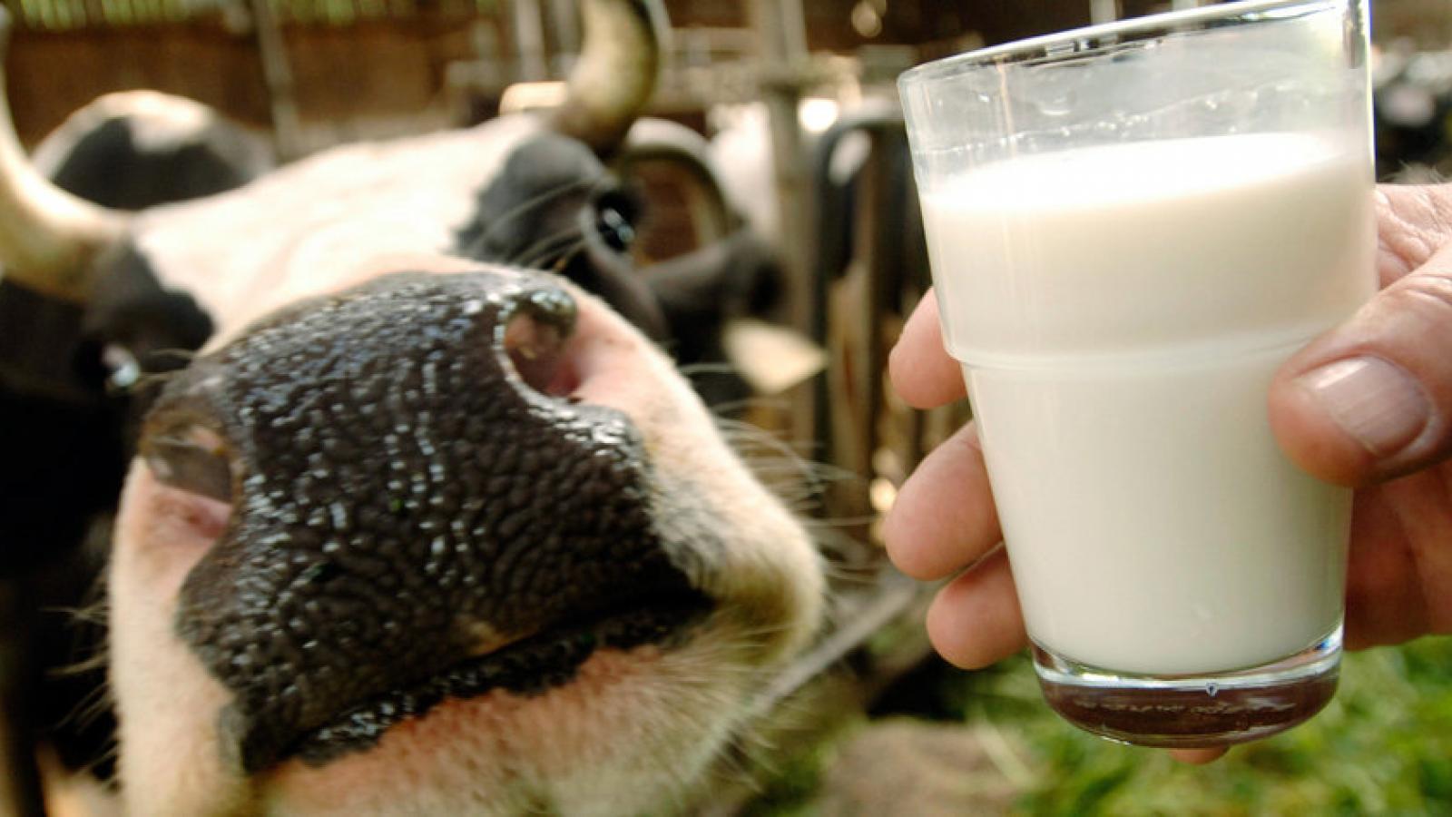 Вологодчина – лидер по производству молока