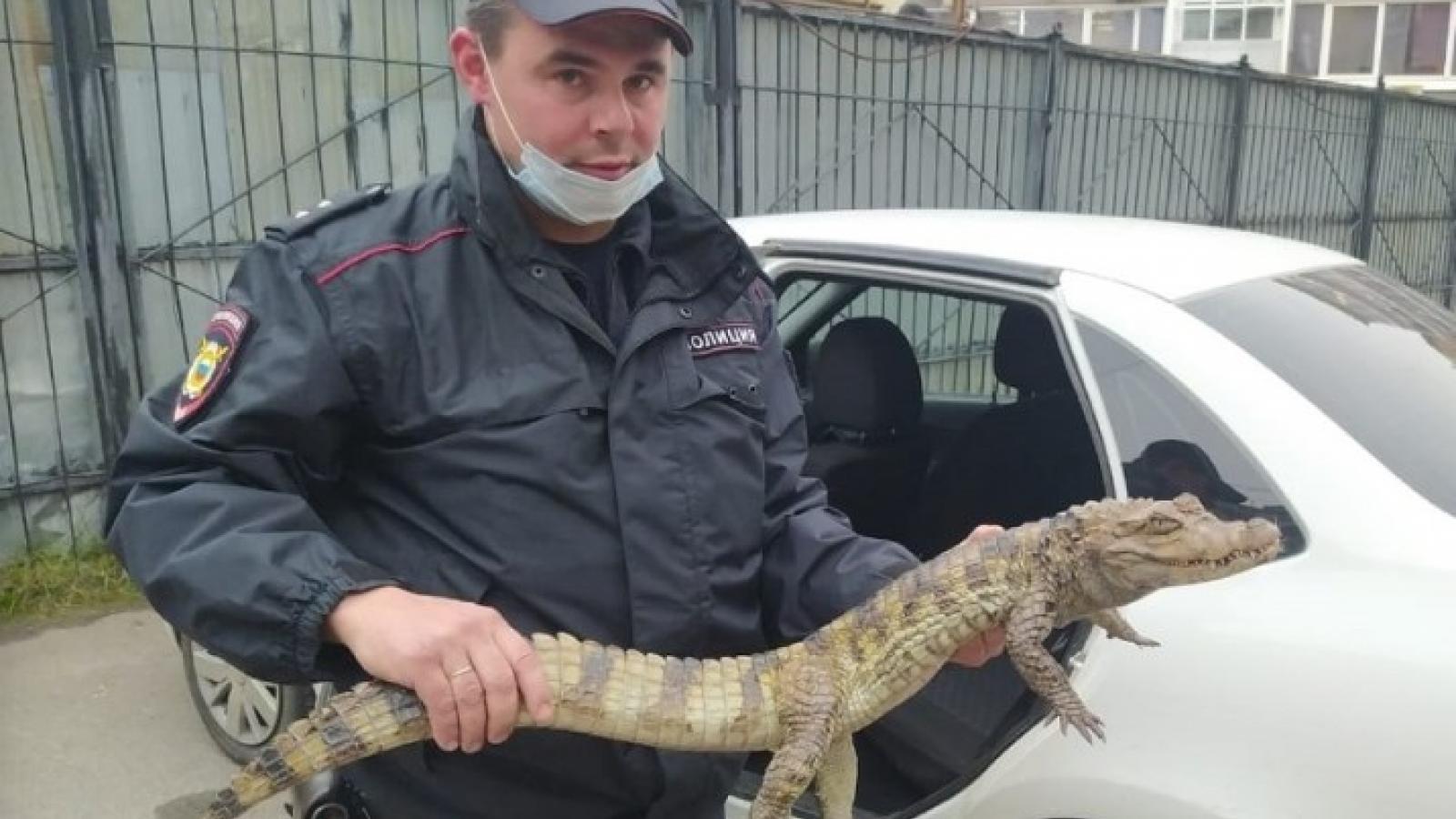 В полицию пришёл парень с крокодилом