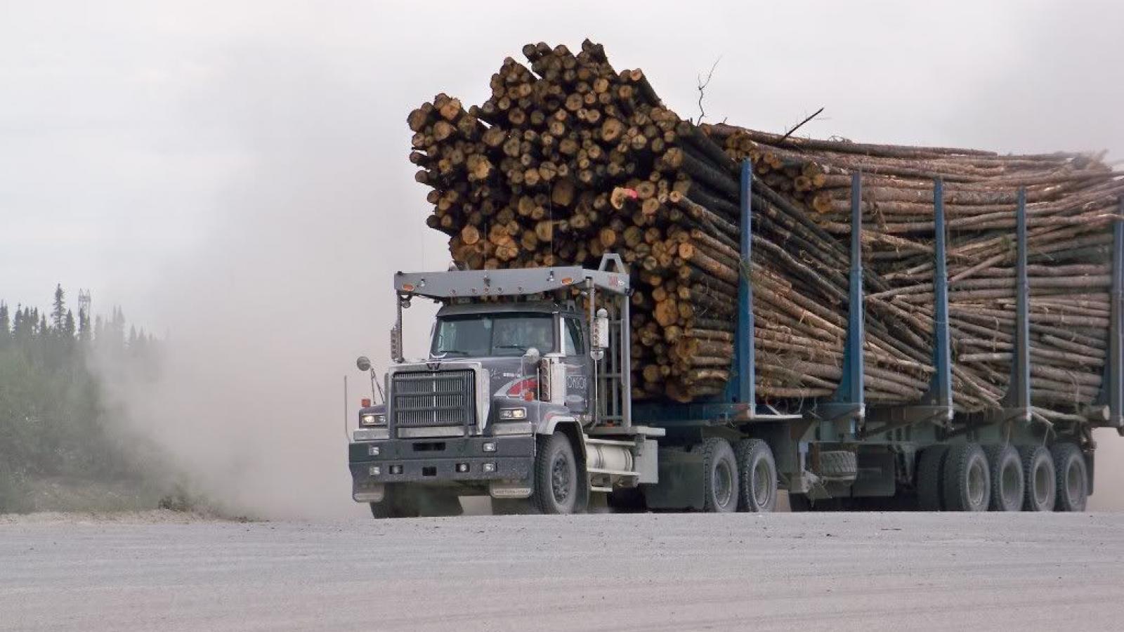 Лесовозы обходят весовой контроль