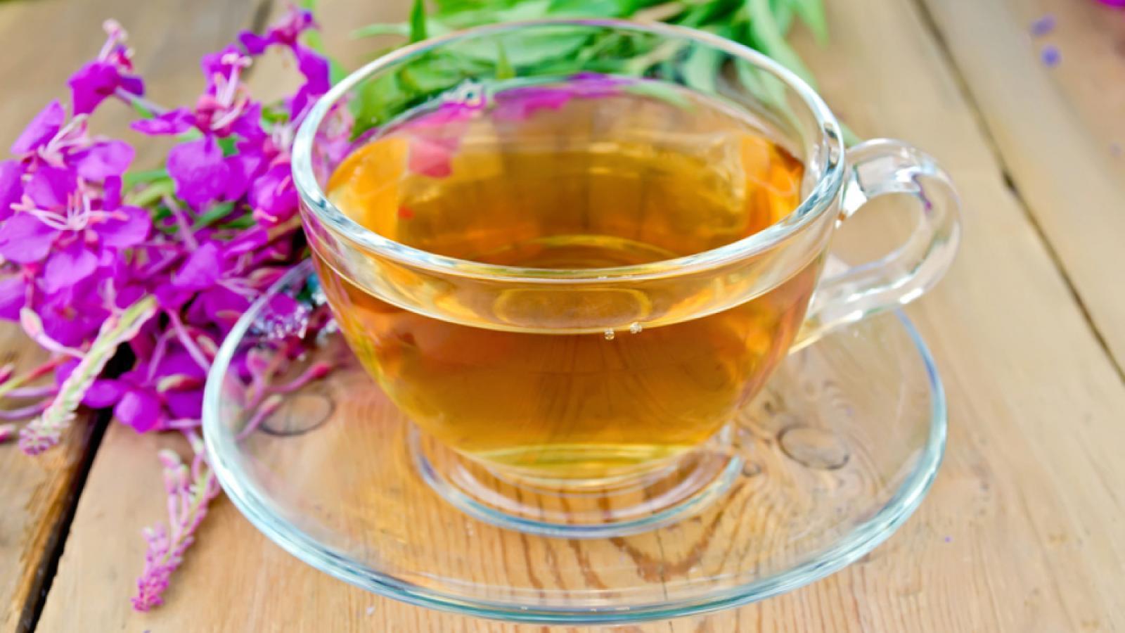 На Вологодчине появится крупное предприятие по производству Иван-чая