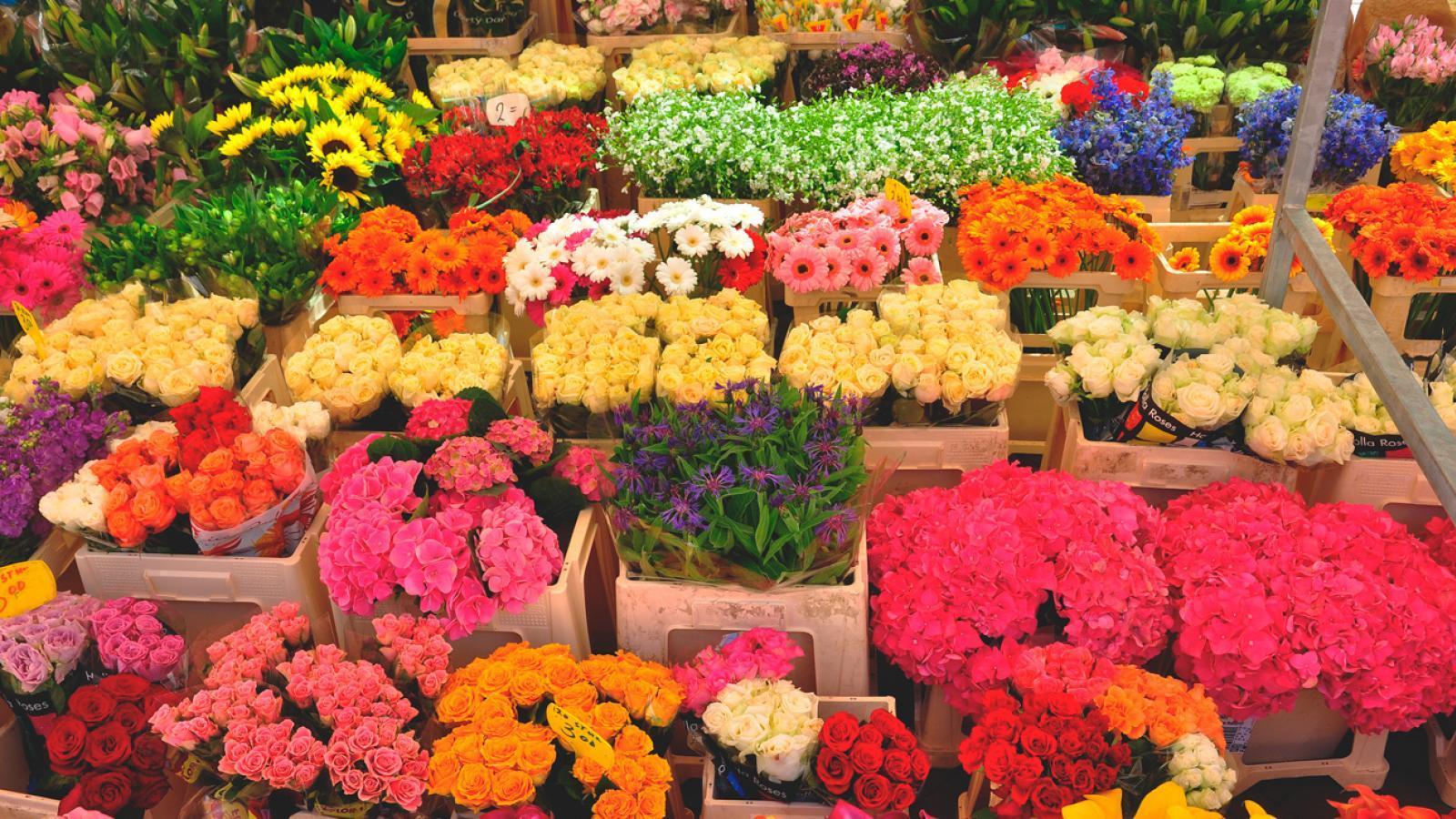 Продажа цветов, цветы в свао дешево