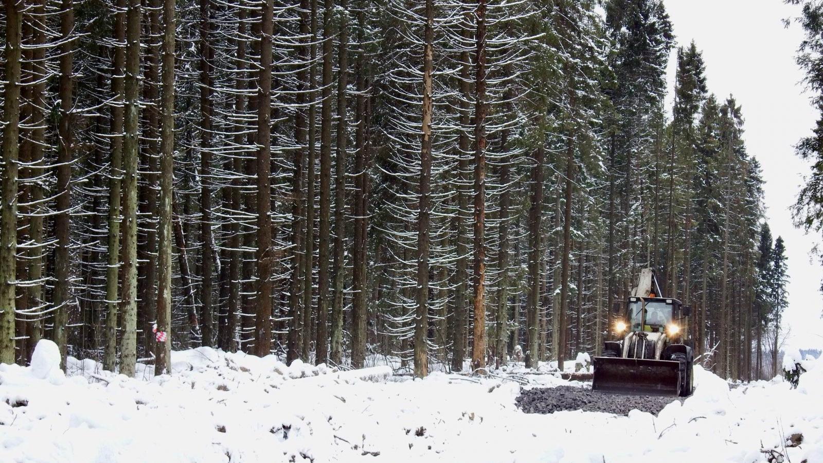 Череповчане борются за сохранение леса за улицей Олимпийской
