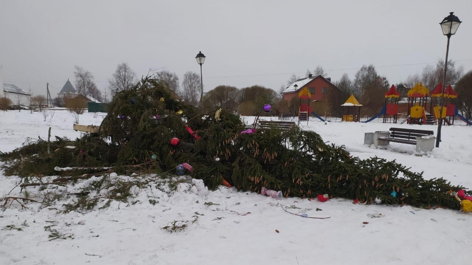 В Вологде уронили новогоднюю ель