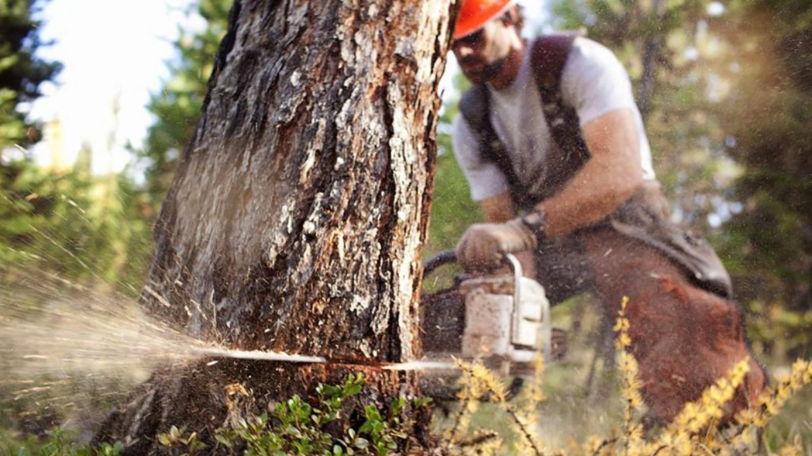 Какой доход приносят леса Вологодчины?
