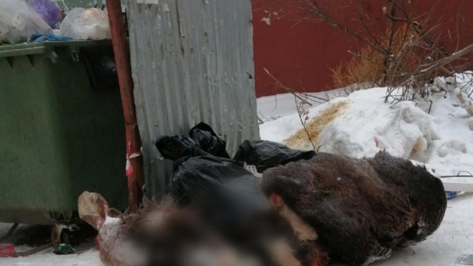 Мёртвого лося нашли в Вологде