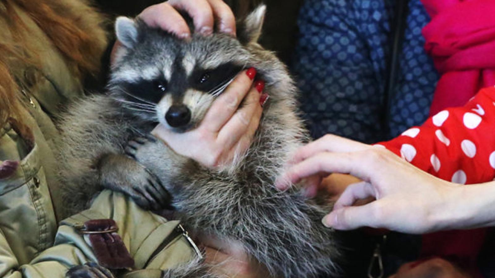 Контактные зоопарки запретили