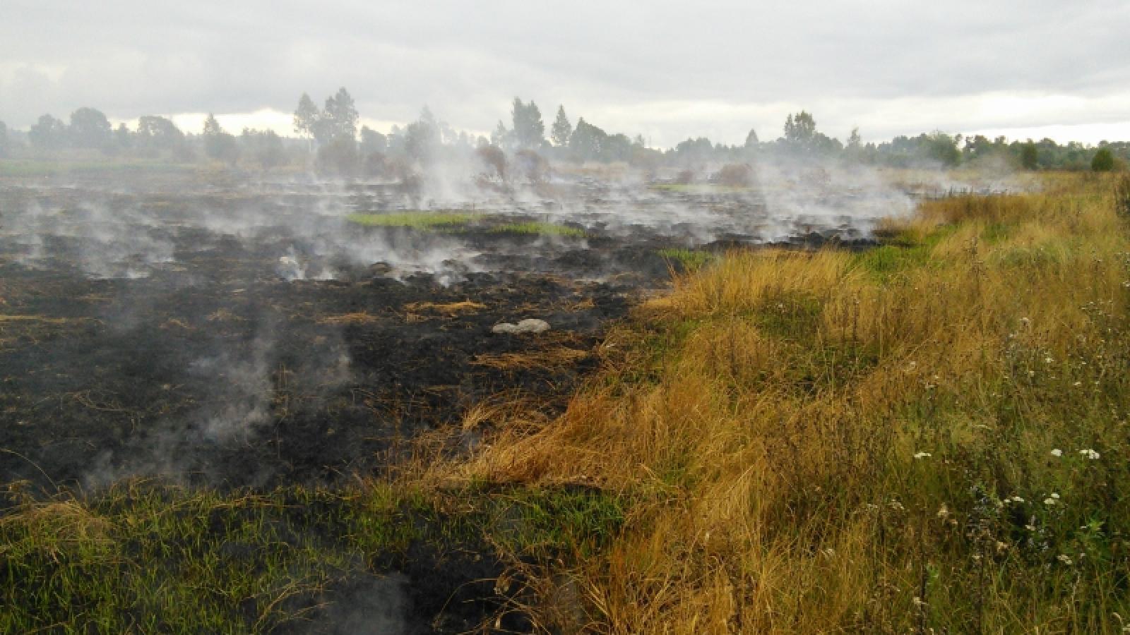 Торфяники начали гореть под Вологдой