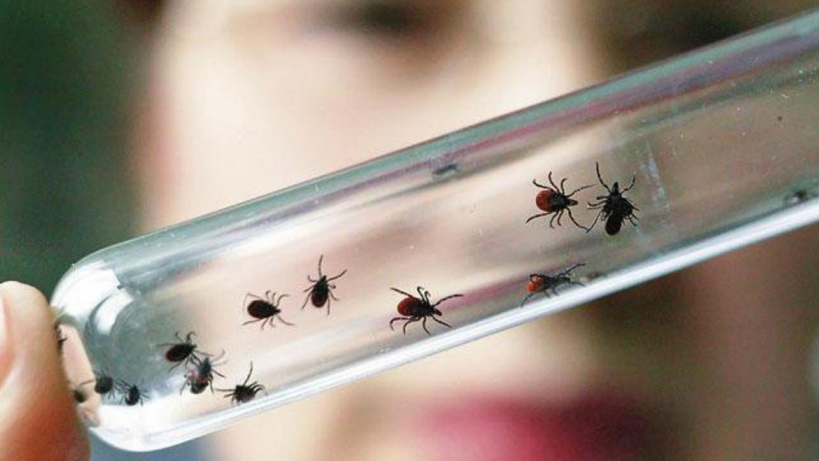 Около 14 тысяч вологжан пострадали от укусов клещей