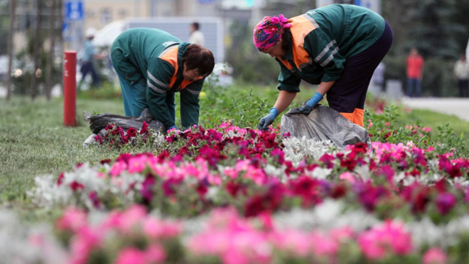 В 17 миллионов обойдется посадка цветов в Череповце