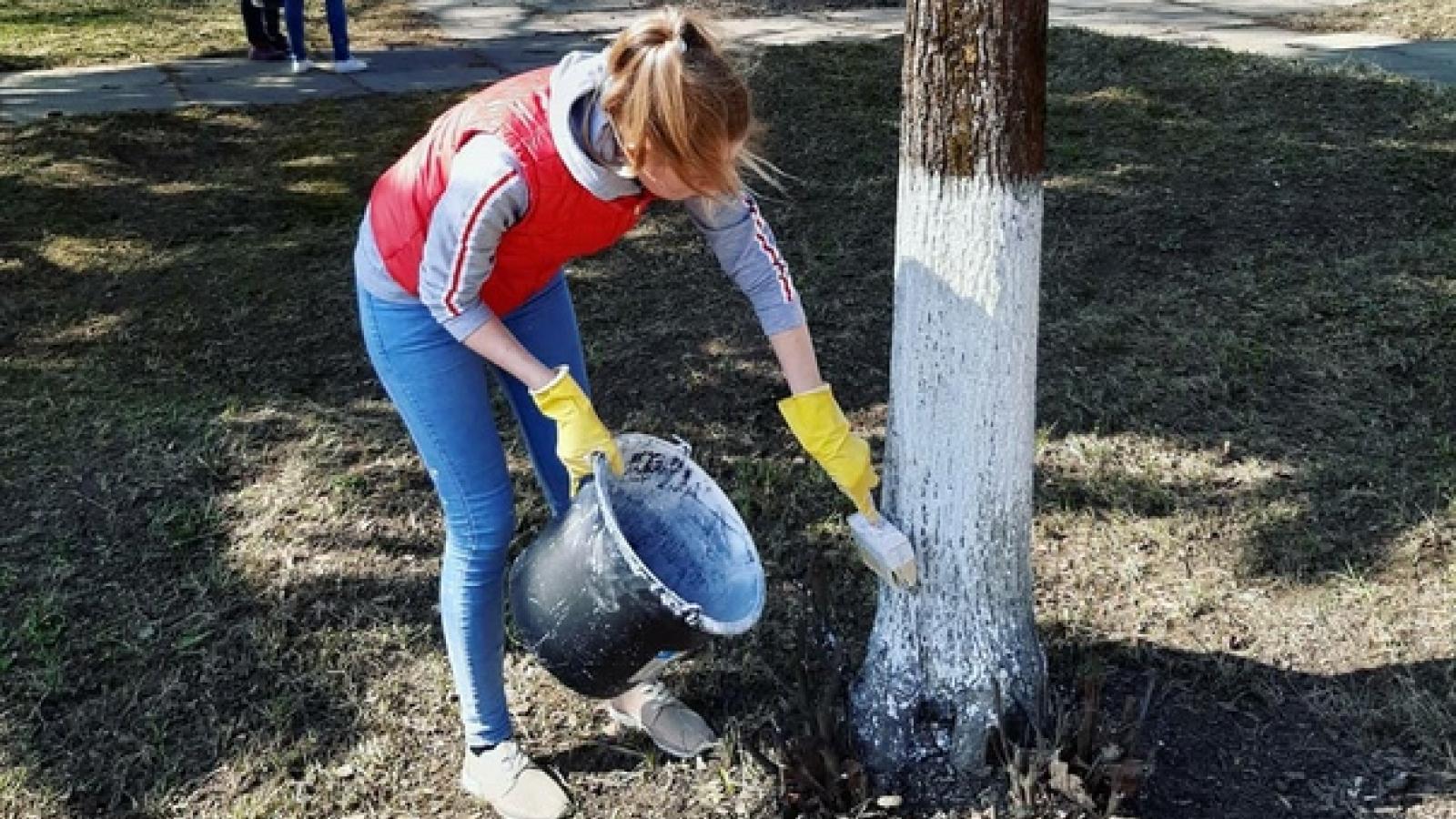 Белить деревья больше не будут