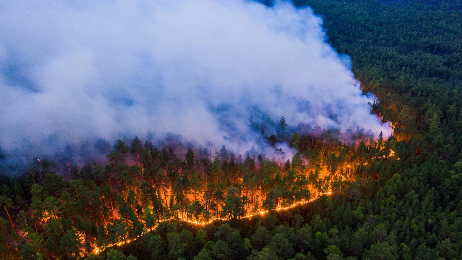 Лесные пожары бушуют в Верховажском районе