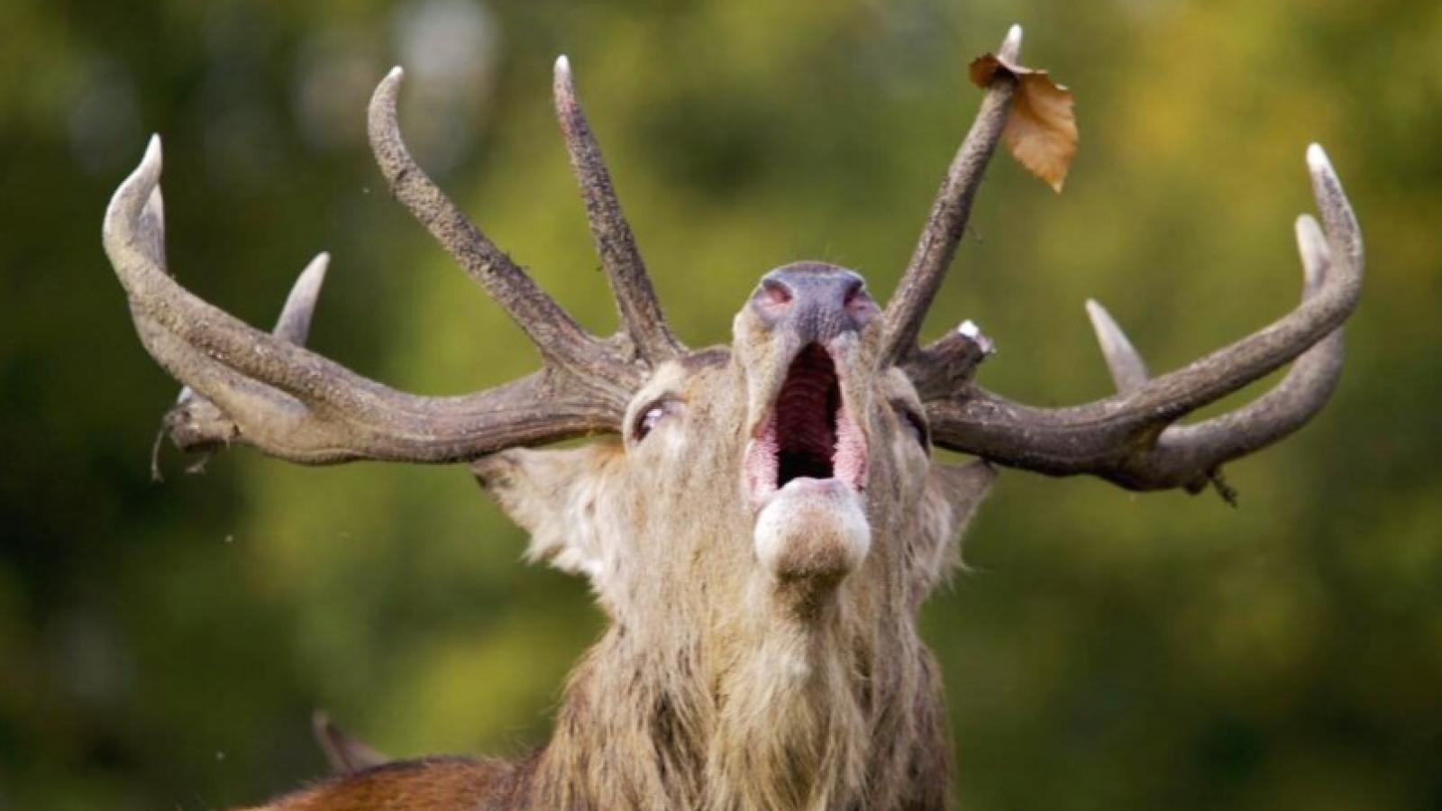 Охотники заплатят за лося 400 тыс. руб.