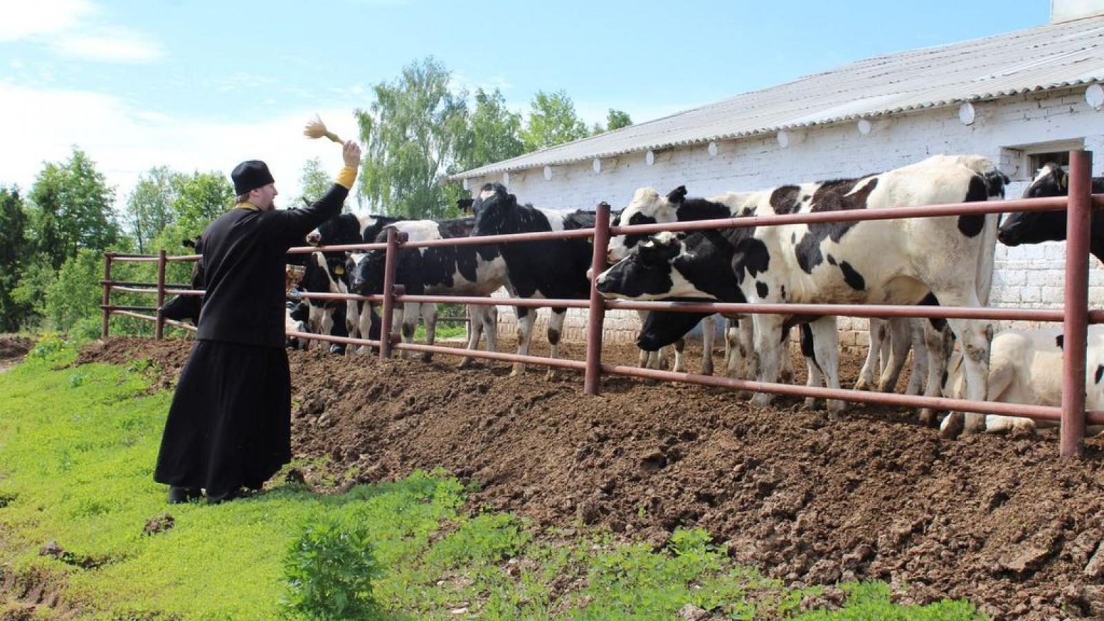 На Вологодчине освятили 2 тысячи коров