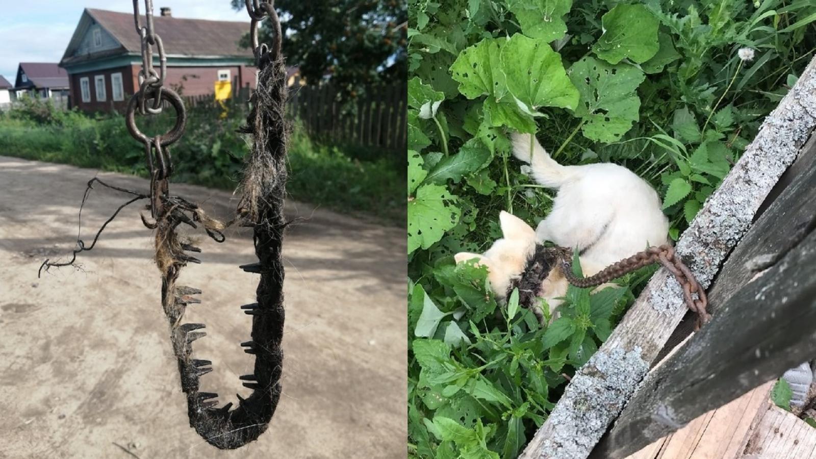 Многодетная семья мучила собаку