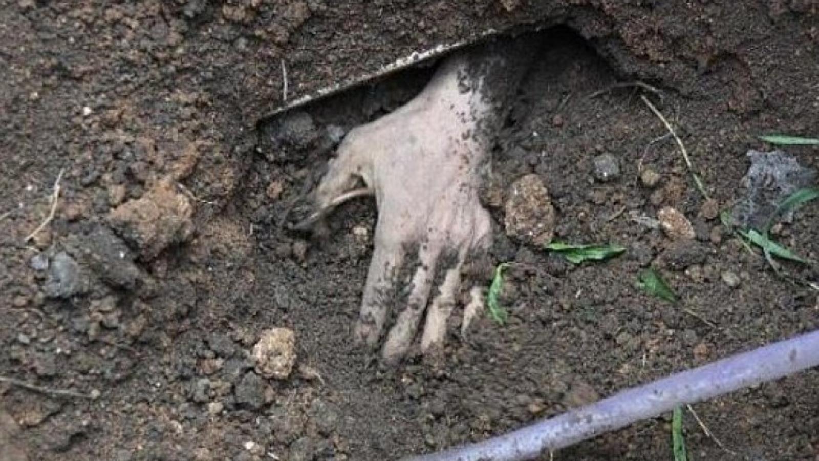 Риелторы-убийцы закопали тело в лесу