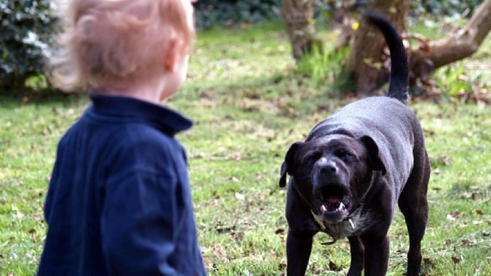 Грязовчанка отсудила деньги за нападение собаки на ребёнка