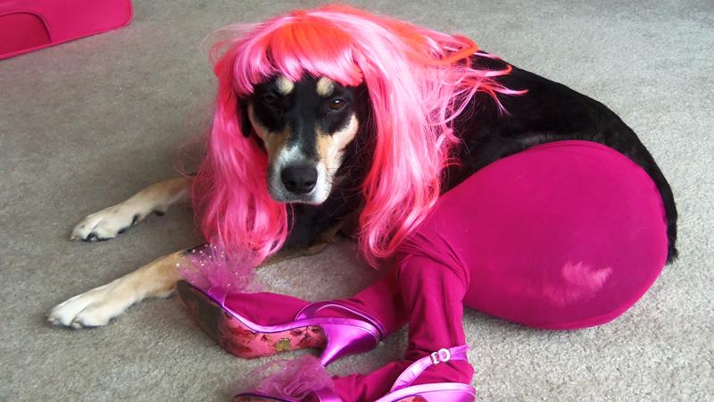 В Тотьме выберут самую гламурную собаку
