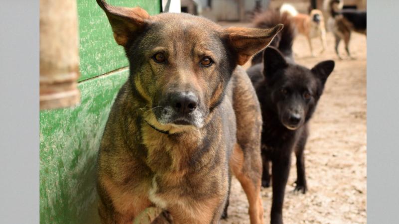 Бездомные животные нуждаются в помощи вологжан