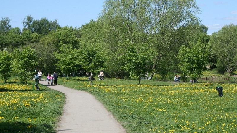 В Вологде начали благоустраивать Ковыринский парк