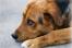 В Тотемском районе мужчину накажут за выстрел в собаку
