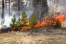 На Вологодчине зарегистрирован первый в этом году лесной пожар