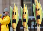 Вологжане больше не смогут купить американскую сою и кукурузу