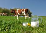 11 июня в Харовском районе пройдет «День молока»