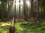 Грибник, заблудившийся в лесу 9 сентября, найден живым