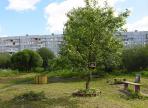 Три новые зеленые зоны появятся в Вологде