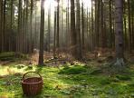 В лесах Вологодской области до сих пор не найдены 10 человек
