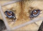 Госдума ужесточила наказание за издевательство над животными