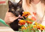 На выставке бездомных животных 7 кошек нашли новых хозяев