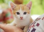 23 июля напротив ТЦ «Мармелад» бездомные собаки и кошки будут ждать новых хозяев