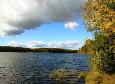 Тело мужчины обнаружено на берегу Белого озера