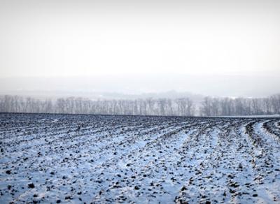Аграрии Вологодчины переживают за судьбу зерновых