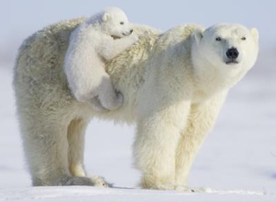 Фотовыставка «Вызов Северному полюсу» откроется сегодня в Вологде